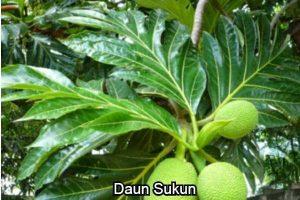 Daun Sukun